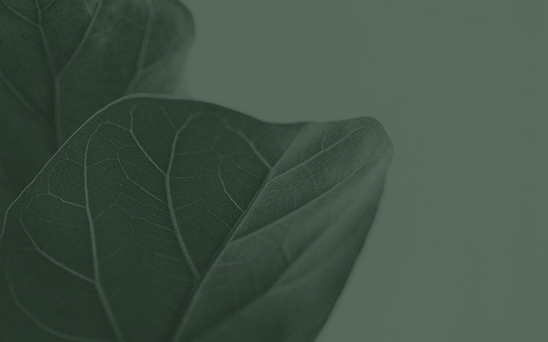 Blog _ Logo Design Perth